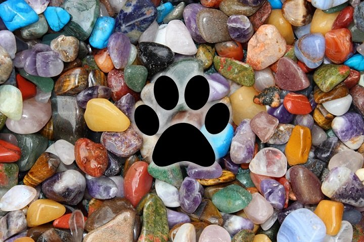 paws-and-stones